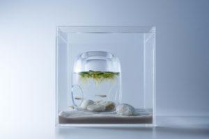haruka-misawas-sculptural-fish-tanks-13