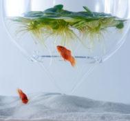 Удивительный аквариум от Харука Мисав