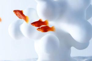 haruka-misawas-sculptural-fish-tanks-4