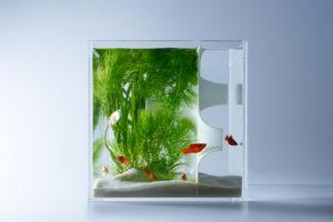 haruka-misawas-sculptural-fish-tanks-7